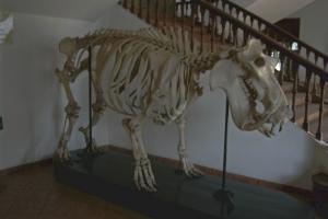 Entrada Museu de História Natural - Hipopótamo
