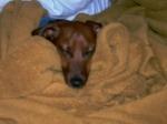 Otto debaixo do cobertor