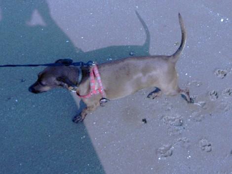 Otto andando na areia