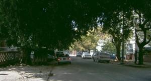 ruas arborizadas em Maputo