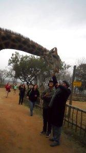 Girafa encara Guilherme e Eduardo