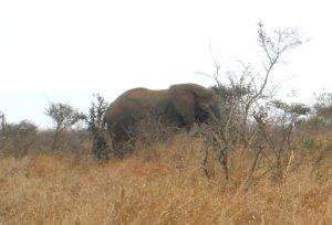 Café da manhã de elefante