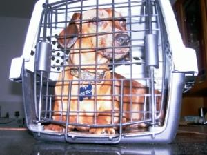 Otto na caixa de viagem