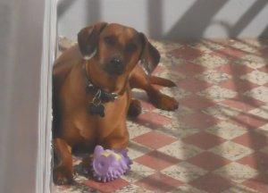 Otto toma sol na varanda